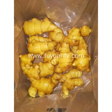fresh ginger expor to Turkey