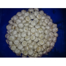 Pure White Garlic Fresh Crop 2019