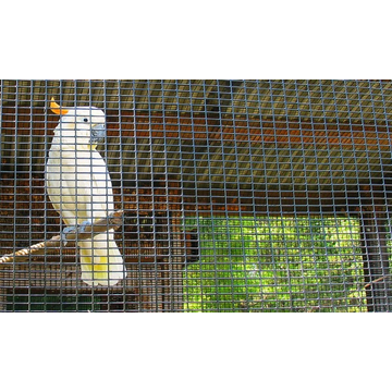 PVC Coated Birds Cage Welded Wire Mesh