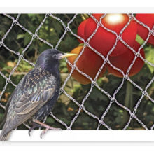 UV Resist Plastic Mesh Anti Bird Net