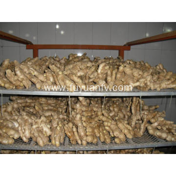 Wholesale Price Air Dried Ginger with good quality