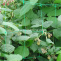 Vegetables/flowers plant support netting