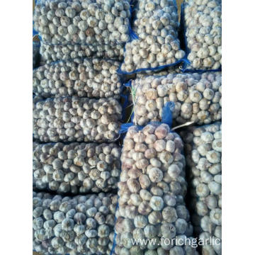 Loose packing Normal White Garlic 10kg mesh bag