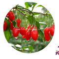 Largest wholesale EU certified Goji Berry