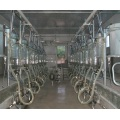 Full-Automatic Glass Milking Parlor for Goat/Sheep