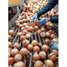 Fresh Yellow onion to Thailand