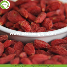 Buy Natural Nutrition Dried Lycium Fruit