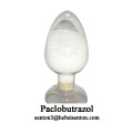Plant Growth Regulator Paclobutrazol PBZ