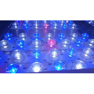 Red & Blue 300w Led Grow Light for Growing Growth