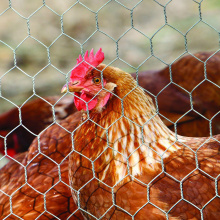Good Performance Chicken Hexagonal Steel Wire Mesh