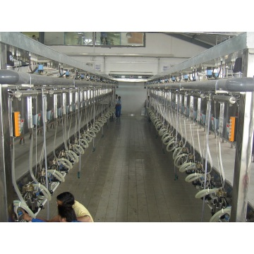 Automatic milking hall for cows and goats