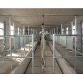 Auto full milking parlor for dairy cows