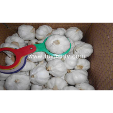 small packing white garlic