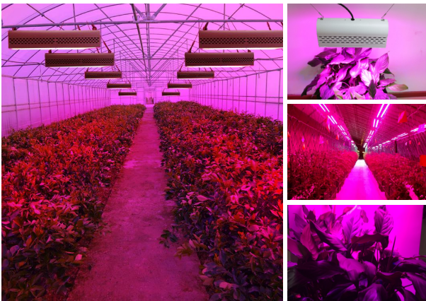 Greenhouses LED Plant Grow Light
