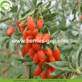 Factory supply Nutrition Dry Fruit Goji Berry