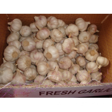 Fresh Normal White Garlic 4.5cm