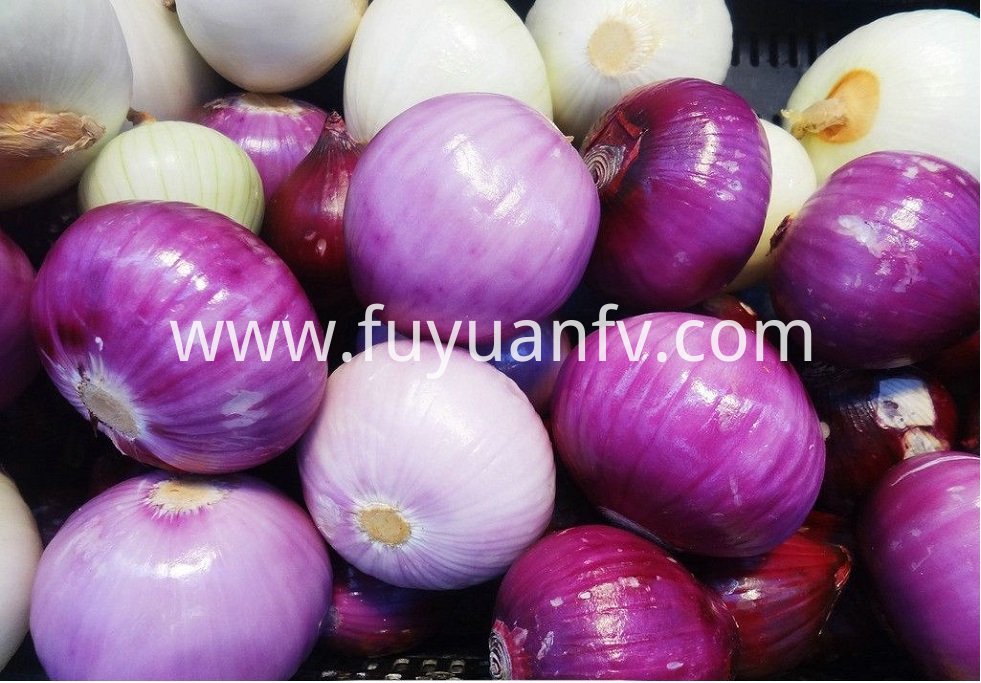 Red Onion 13