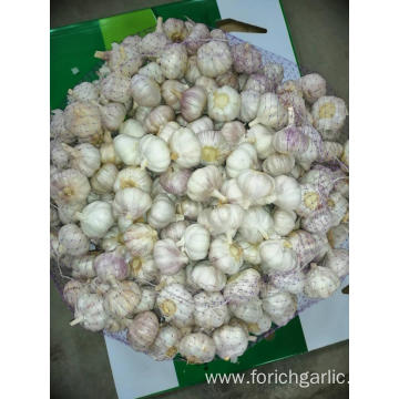 2019 Normal White Garlic New
