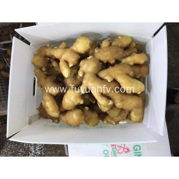 FRESH GINGER GOOD QUALITY