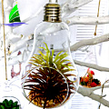 Crystal Bulb Shape Air Plant Glass Terrarium