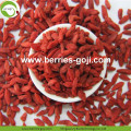 Hot Sale Nutrition Red Dried Organic Goji