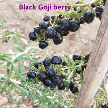 Purple and Blue water from Black Goji berry