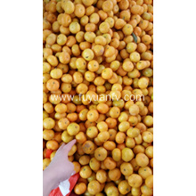 Fresh baby mandarin with best price