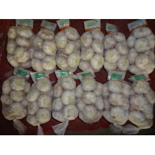 Fresh Normal White Garlic Size 5.0