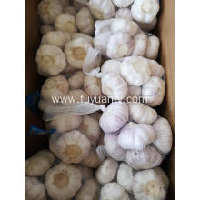 garlic 2019 new from jinxiang
