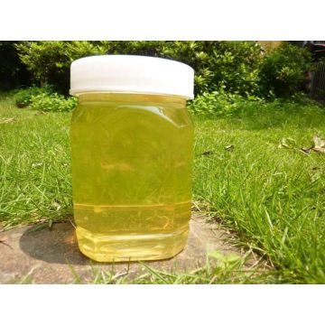 Homogenized Pure Organic Linden Honey