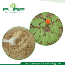 Natural Siberian Ginseng Leaf Extract Powder