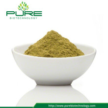 Hot Sale Pure Stevia Leaves Green Powder