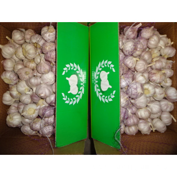 Best Quality Fresh Normal White Garlic