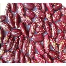 Factory wholesale price for Dried Purple Speckled Kidney Beans Purple Speckled Kidney Beans supply to Guinea Manufacturer