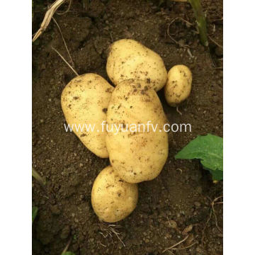 Wholesale organic fresh potato price