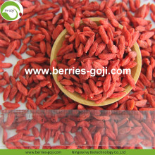 New harvest Hot Sale Dried Himalayan Goji Berries