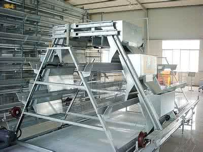 A Type Chicken Poultry Equipment