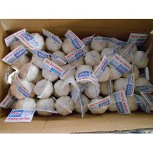 OEM/ODM for Normal White Garlic 4.5-5.0Cm 2018 new crop Fresh Garlic supply to Svalbard and Jan Mayen Islands Exporter