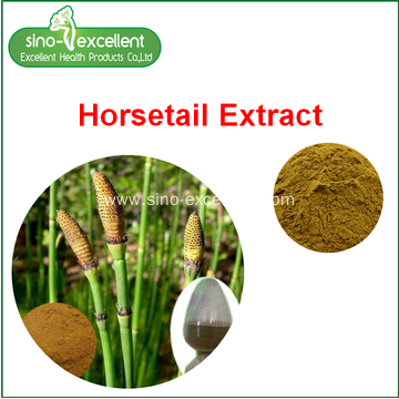 Natural herb Horsetail Extract
