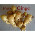 High Quality Ginger In Good Price