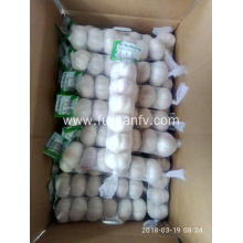 Holiday sales for Normal White Garlic 5.0-5.5Cm New crop of Normal white garlic supply to Cayman Islands Exporter
