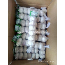 Fast Delivery for Frozen Garlic New crop of Normal white garlic export to Paraguay Exporter