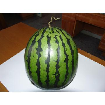 F1 hybrid watermelon seeds for sales