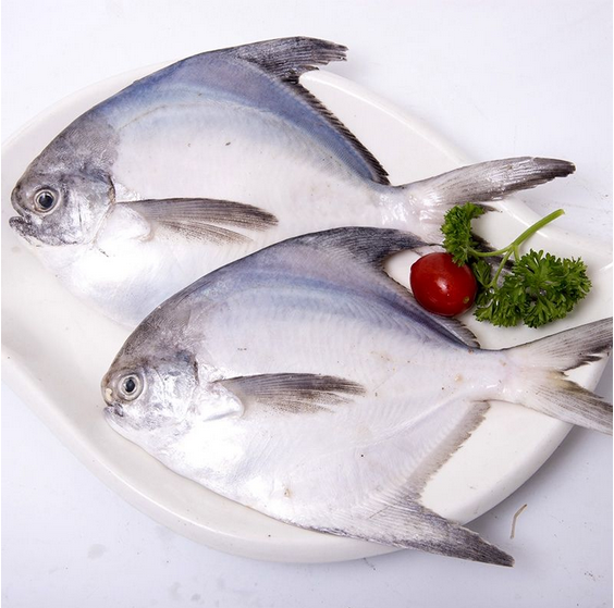 Well Selling Sea Frozen Pomfret