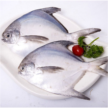 Whole Round Sea Frozen Pomfret