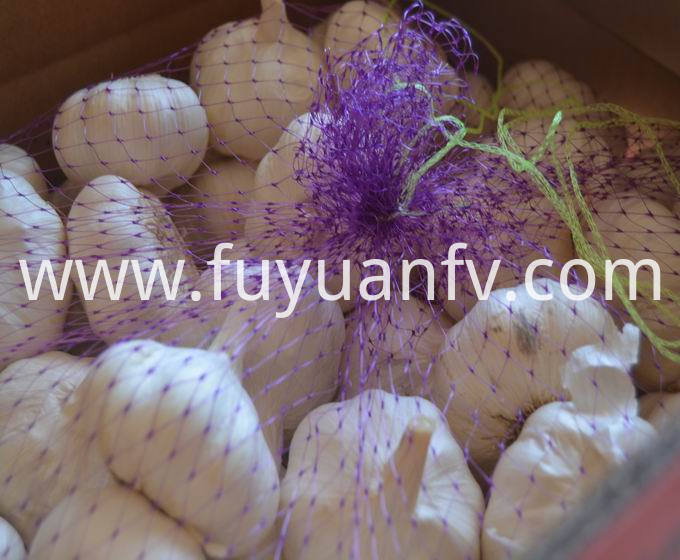garlic in carton