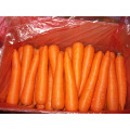 Fresh New Crop Carrot