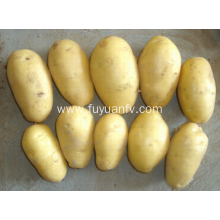 Good quality hot  sale potato for export