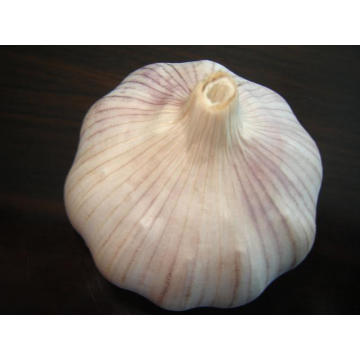 Different Sizes of Jinxiang Normal White Garlic