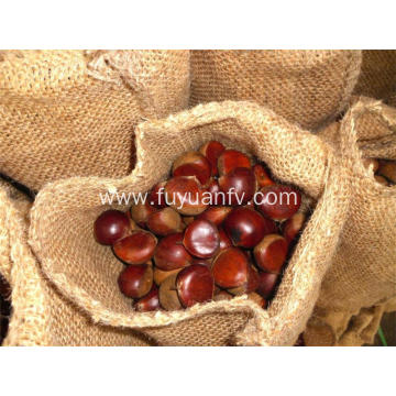 Dandong chestnut from factory fresh big chestnuts